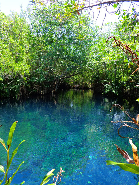 Cenote Aguila Hacienda Tres Rios