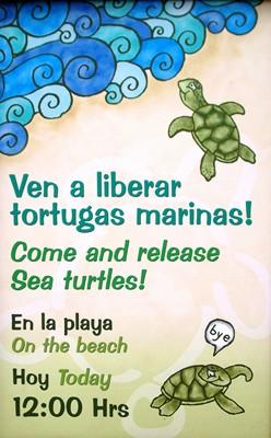 tortugas marias